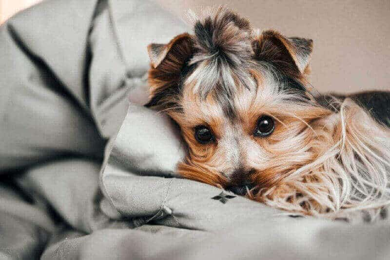How To Recover Possession Of Your Dog (Or Other Personal Property) Through Replevin